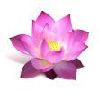 Logona : gel lavant à l'argile blanche et fleur de lotus